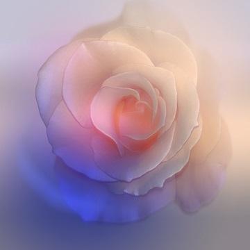 Fleur fanée, coeur aimé ...