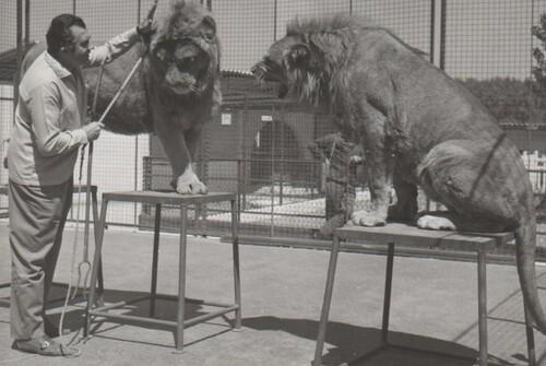 Jean Richard dans son zoo d'Ermenonville
