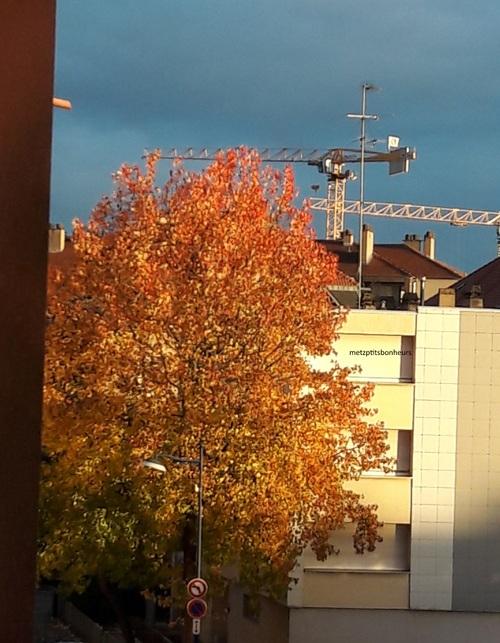 ...les feuilles d'automne....