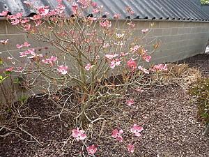 jardin 28 avril2