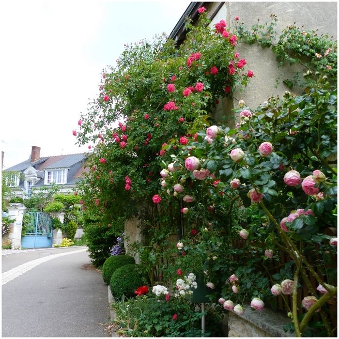 La vie en Rose a Chédigny