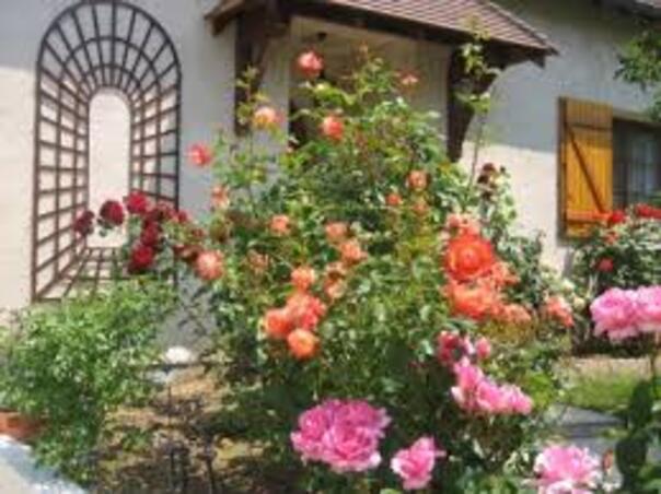 magnifique jardin en fleurs