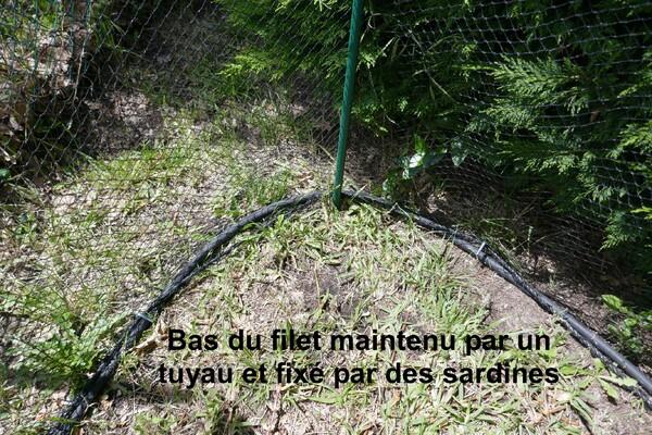 Jardin sécurisé par un filet temporaire pour un chat