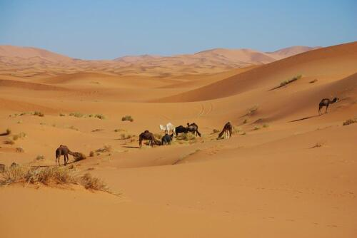 En route pour le désert