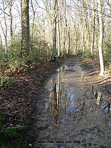 forêt janvier 201102