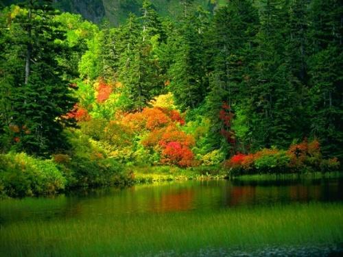 l'automne hamdibey