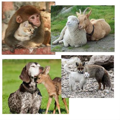 Les animaux nous montrent la voie...