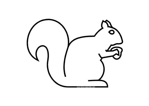 Ecureuil des bois
