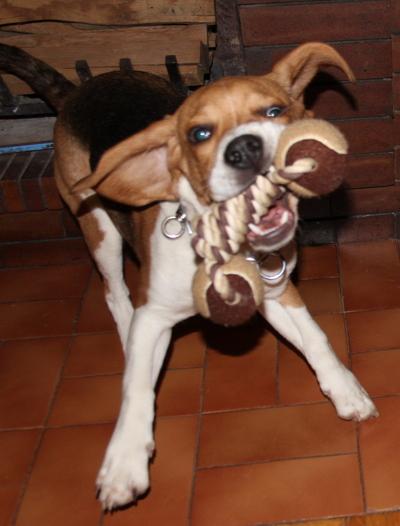 Blog de dyane :Traces de Vie, Ferait presque peur!!! rires