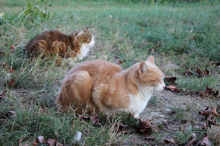 Dimanche Cat
