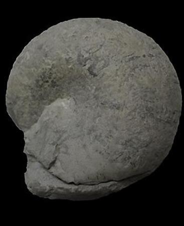 MOUSSOULENS Aude (Carrière à fossiles)