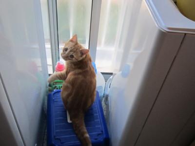 Blog de roselyne :Humanité, Nature,  Amour et lumière, La mission des chats dans notre vie