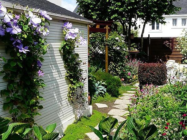 Clematites-sur-cabane-de-jardin-9-06-12-081.jpg