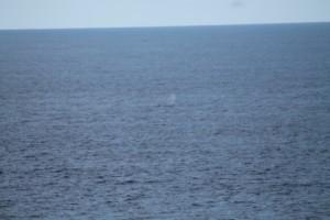 baleine-2876.JPG