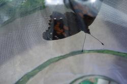 En MS-GS : les chenilles sont devenues papillons