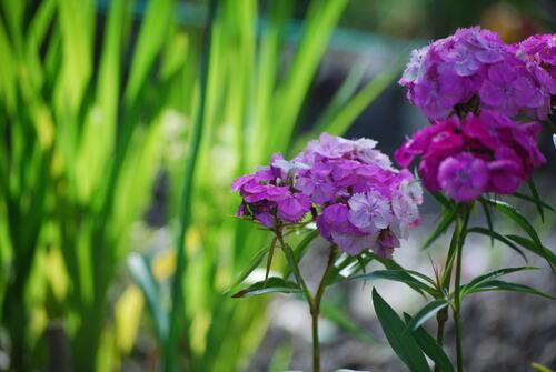 En 2013, le Printemps arrive le 21 juin, jour du début de l'été...