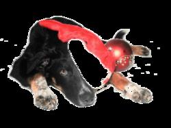 Les chiens-jouets de Noël …