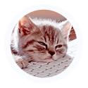 [libre service] Avatars kittens arrondis