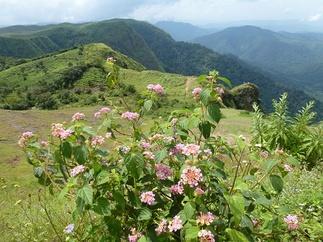 Parumthumpara fleurs et plantation de thé