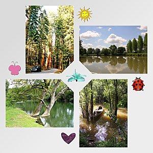 L'arbre.... la richesse de la terre !!!