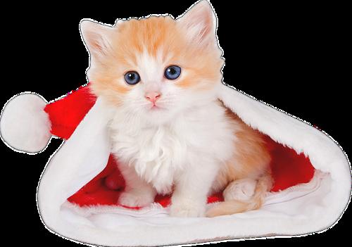 Animaux de Noël Série 7