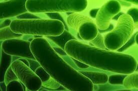Bactéries de l'impossible