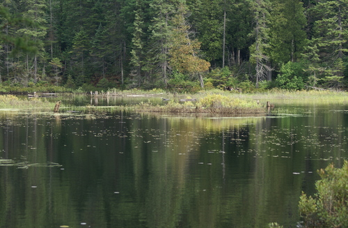 Parc Algonquin - la conquête du Canada sauvage