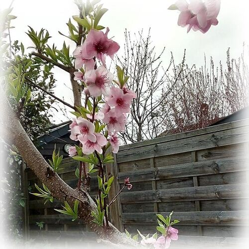 Plaisirs de printemps