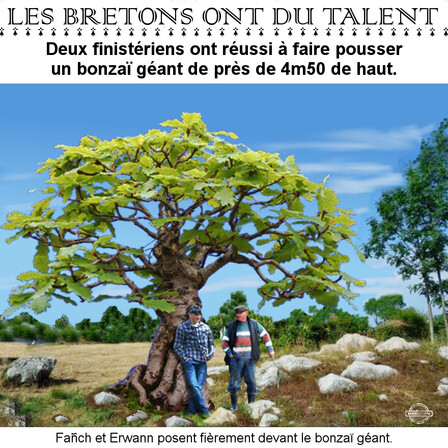 Humour breton bonzaï