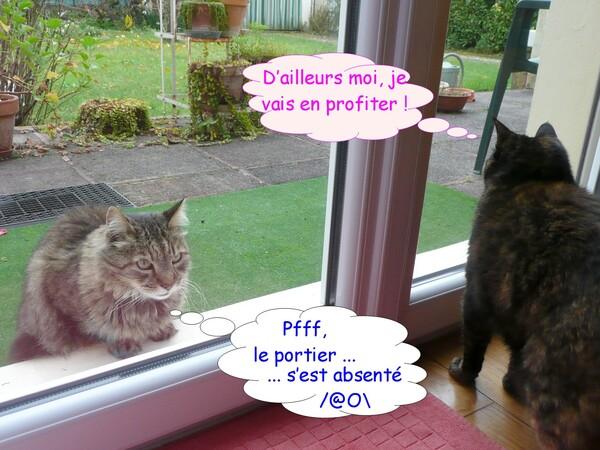 Chats derrière la vitre