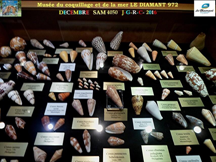 Le monde des coquillages de mer   4/5  1/    LE DIAMANT MARTINIQUE       D    20/04/2017