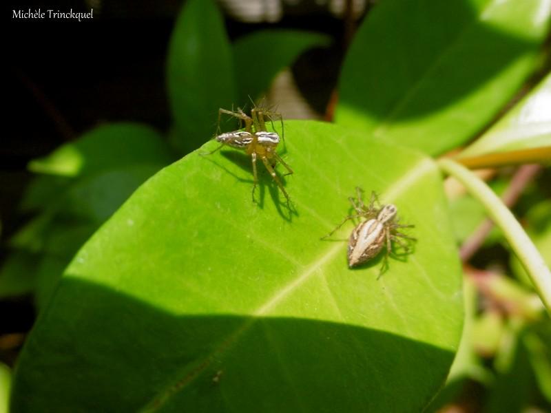 Des bestioles sur mes plantes, le 4 juin....