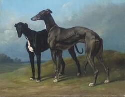 Tableaux de Greyhound .