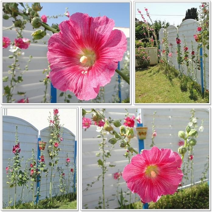 Fleurs du jardin 1sur2