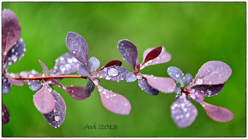Encore la pluie ...
