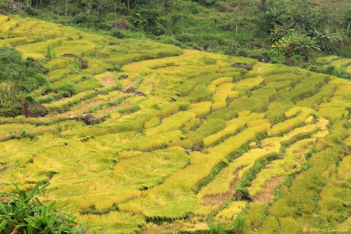 Randonnée dans les rizières de la réserve naturelle Pu Luong