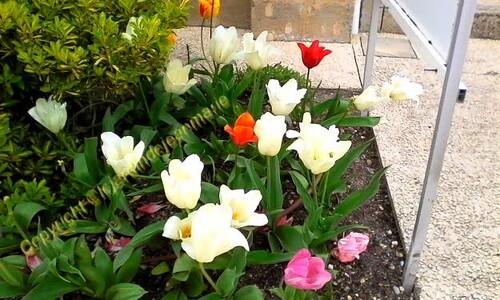 reconnaissance des végétaux,planter vos azalées surtout en terre de bruyère,photos de rocaille dans mon jardin