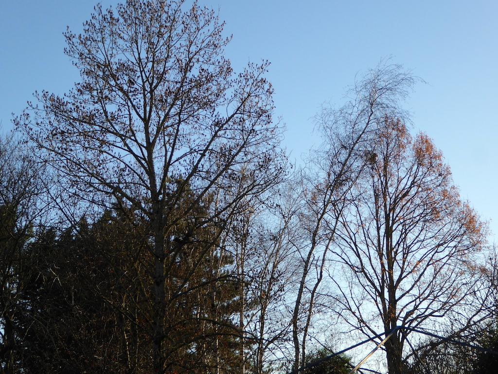 Que le temps est beau pour un début décembre!