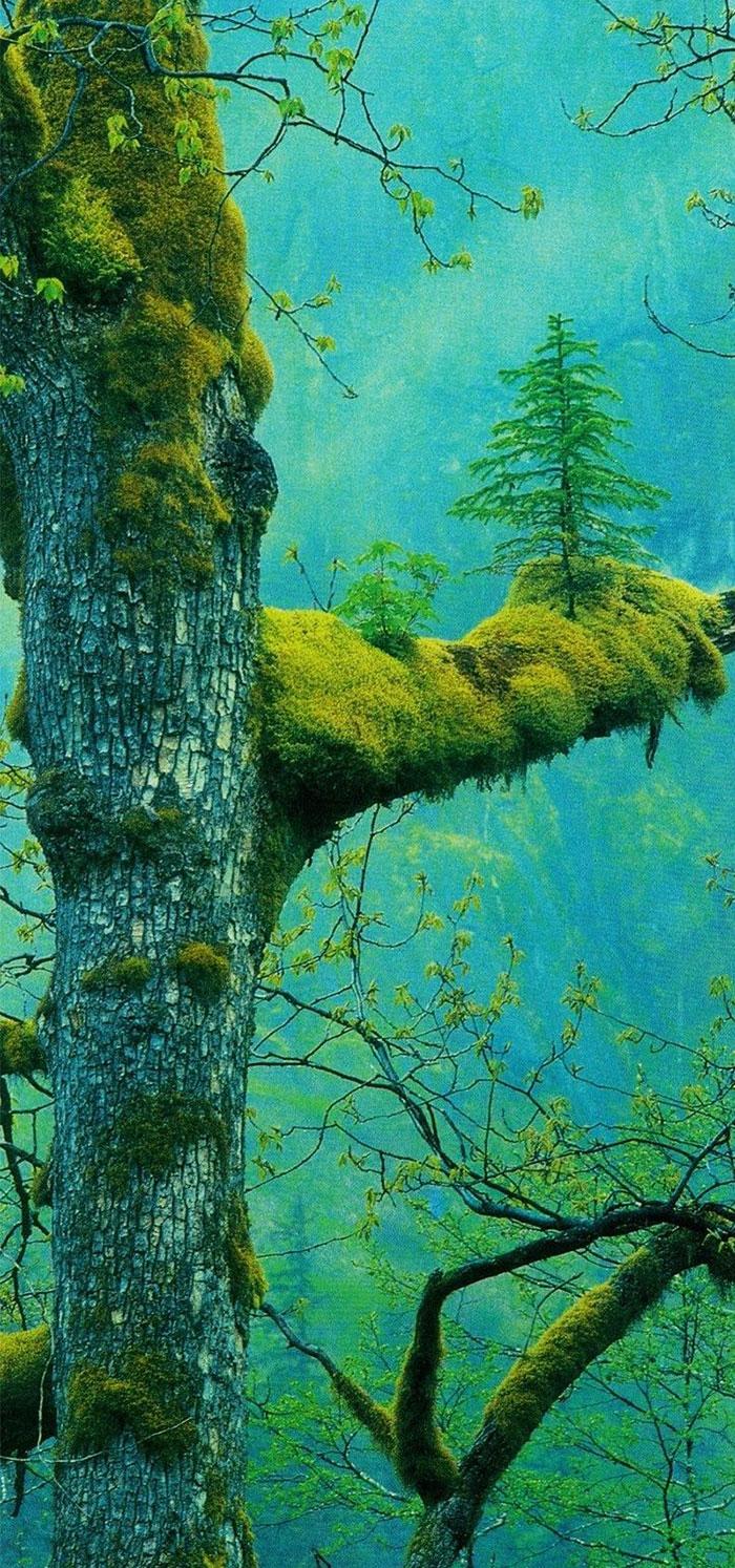 Surprenant .....   les arbres