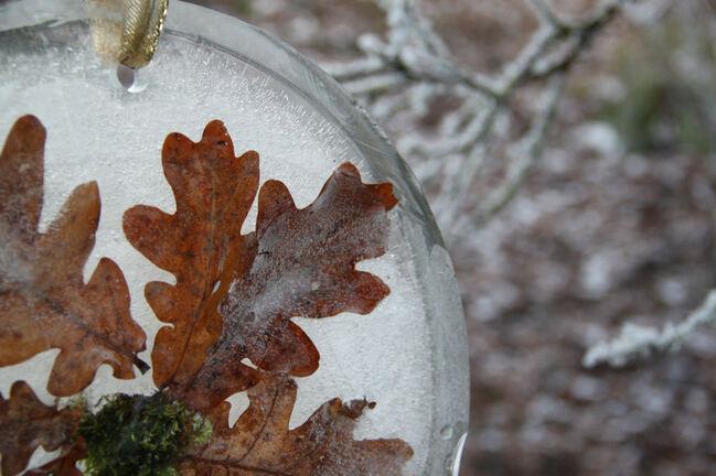 Sous les chênes, décembre givré