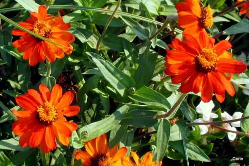 Couleur orange : de jolies fleurs !