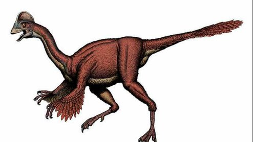 dinosaure-plumes-especes