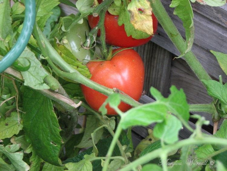 Ingersheim : Au jardin de Gaby