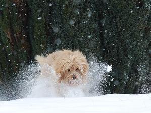 1er neige pour Harry