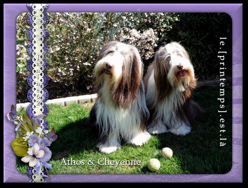 ♥ Bonne semaine d' Athos & Cheyenne♥