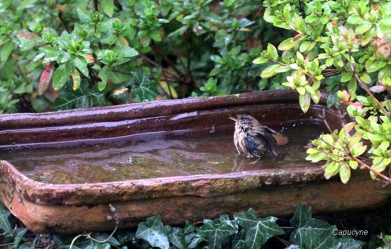 Le bain du troglodyte