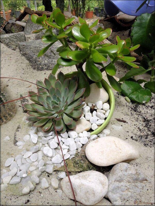Composition de plantes grasses (Serre des cactées)