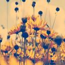 Fleurs 130*130