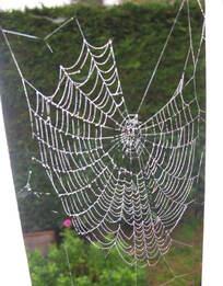 L'araignée Fifi