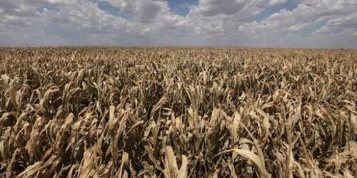 Le spectre d'une crise alimentaire plus grave qu'en 2008